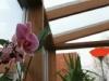 detaliu-lemn-1-wintergarten