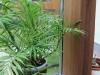 detaliu-lemn-wintergarten